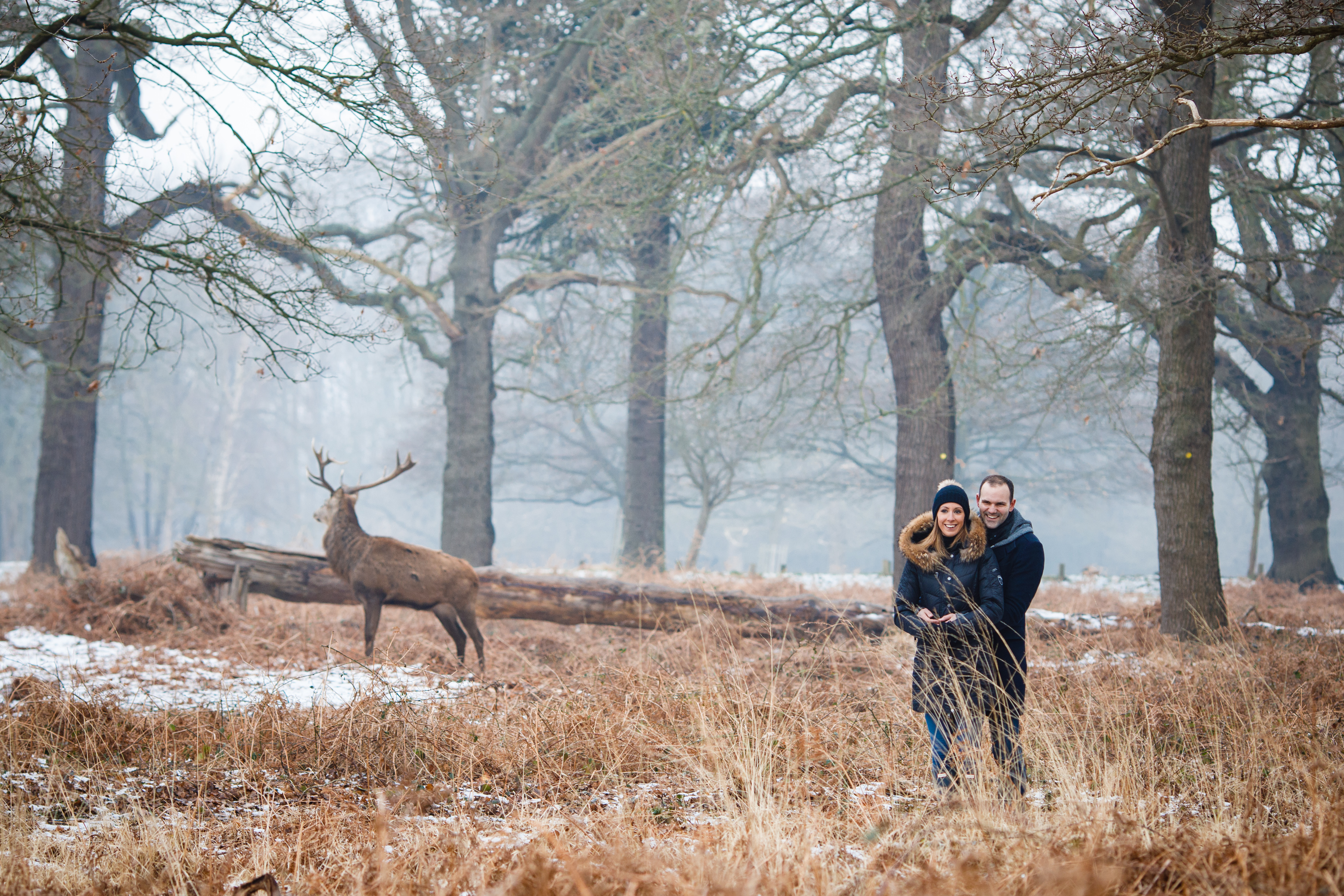 Engagement Shoot with Red Deer Stag in Richmond Park