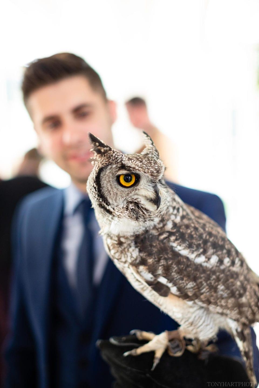 Owl at Northbrook Park