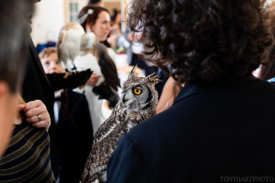 Great Horned Owl during a Northbrook Park wedding reception