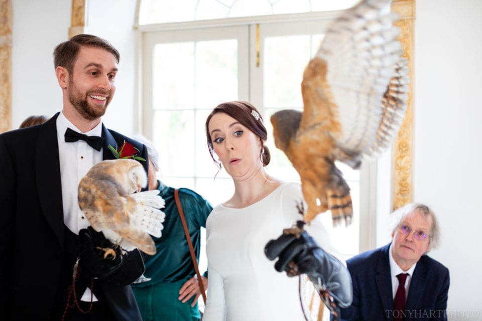 Barn owl tries to make a break for it during a Northbrook Park wedding